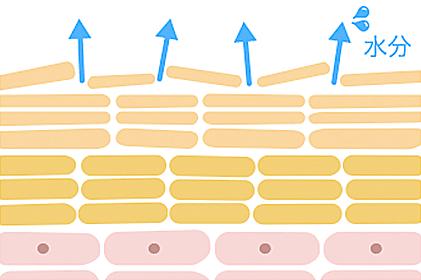 インナードライイメージ図