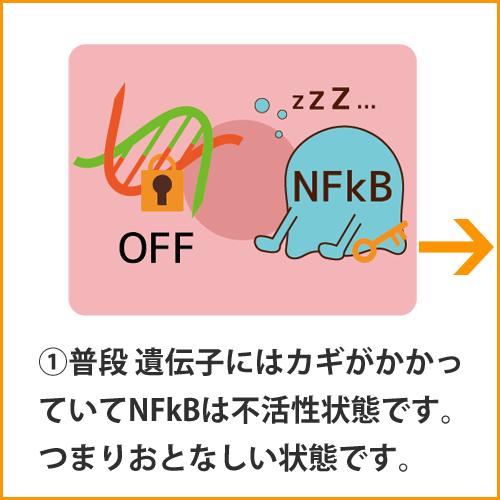 a_NFkB001