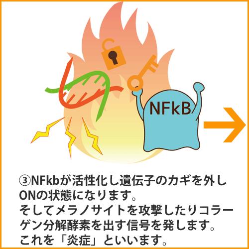 a_NFkB003
