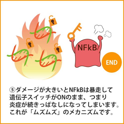 a_NFkB005