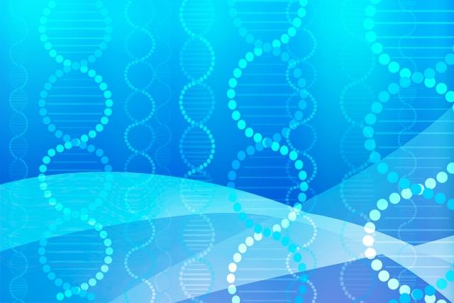 ヒト幹細胞