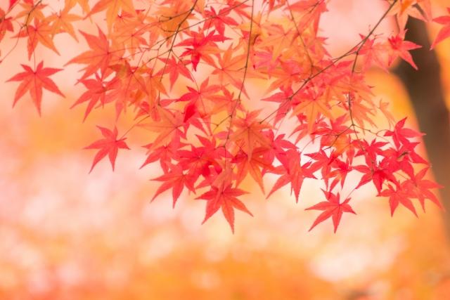 秋のくすみ