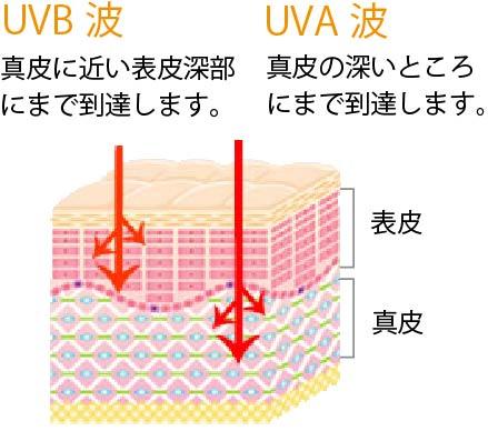 紫外線A波は、真皮まで届く